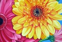 Flowers – Gerberas