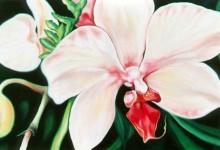 Flowers – Orchids