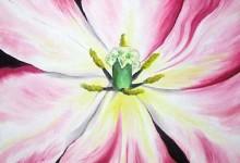 Flowers – Tulips