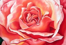 Flowers – Roses